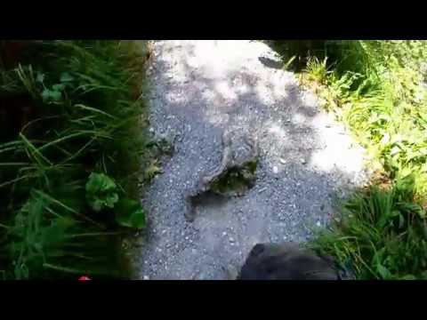 GoPro Kaltenbach Wildnis - GoPro Actioncam - Urlaub im Salzkammergut