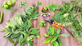 Five permanent plant for your kitchen garden | रसोई मैं हर रोज उपयोग मैं आने वाले 5 पौधे