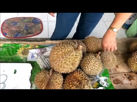 TAGUM CITY, PHILIPPINES, DURIAN FRUIT, JEWELERS AND BARBERS!