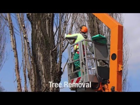 Jackson MS Tree Service - (601) 940-5499