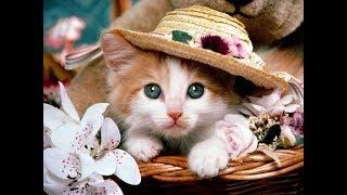 Смешные и милые котики | Видео приколы с забавными котятами