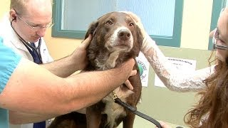 What to Do for a Dog with Allergies