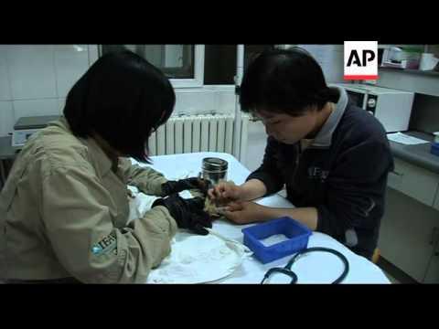 Rescuing captive birds in Beijing