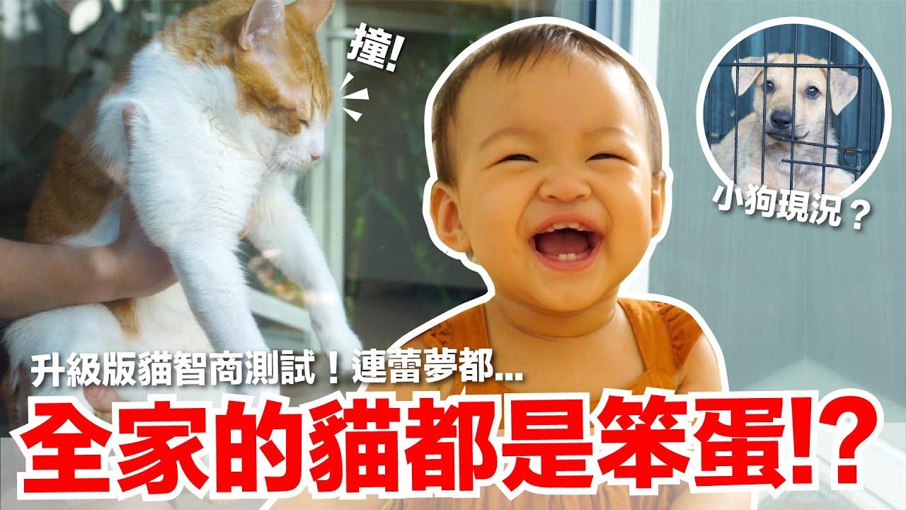 【好味小姐】我們全家的貓都是笨蛋?最後有狗狗小現況|好味貓日常EP106