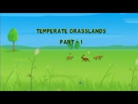Temperate Grassland Episode 01