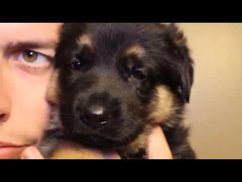 Good Puppy Names