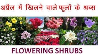 Flowering Shrubs In April || अप्रैल  में खिलने वाले फूलों के श्रब्स