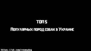 ТОП 5 Популярных пород собак в Украине