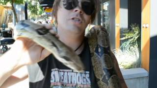 The Colombian Red Tail Boa