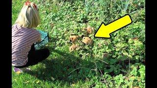 Как вырастить на огороде настоящие белые грибы?