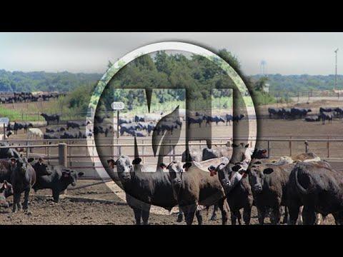 Nebraska Livestock Matrix - Steve Martin - August 17, 2018