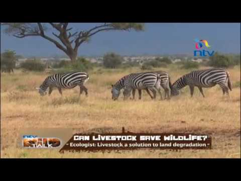 "NTV Wild Talk S5 E7 ""Can livestock save wildlife?"""