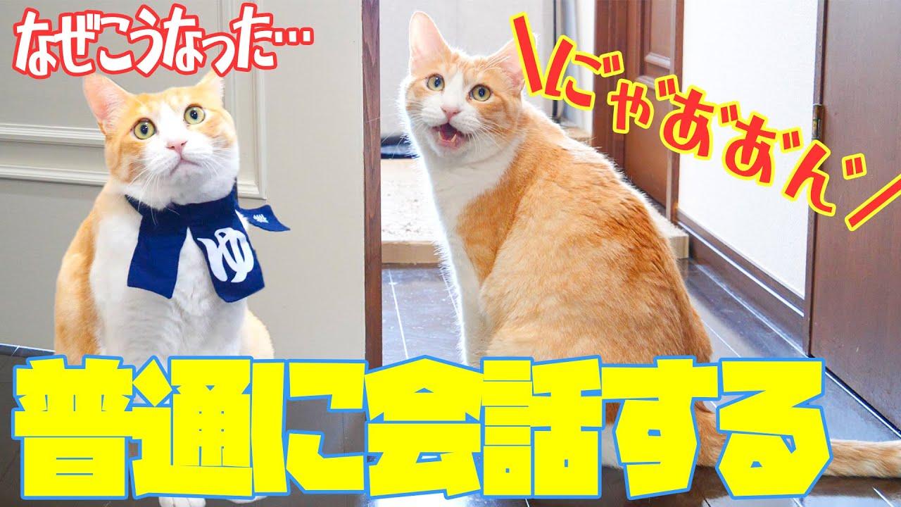 【猫語】当たり前のように人間と会話しコスプレさせられる猫