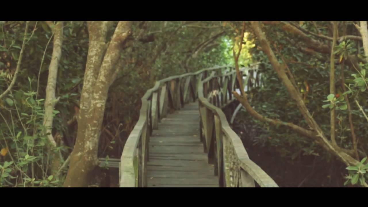 Hutan Mangrove Margomulyo Balikpapan - YouTube