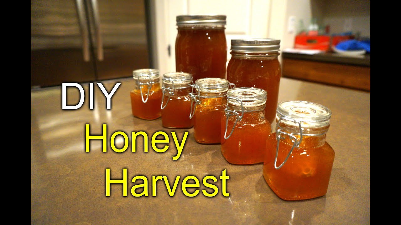 Topbar Bee Hive Honey Harvest First Time How To