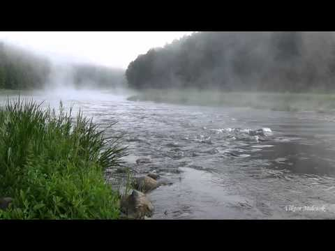 Александровский лес Отдых на природе Ростовской области