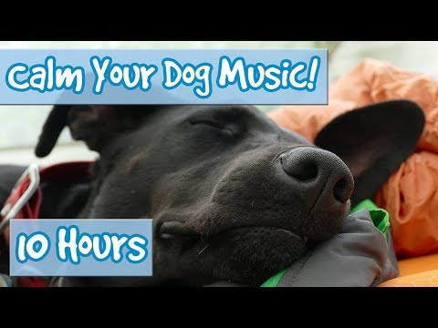 How to Calm Your Dog Down Music! Relaxing Music for Dogs to