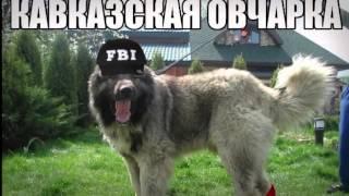 ТОП-10 Самых злых собак в мире.