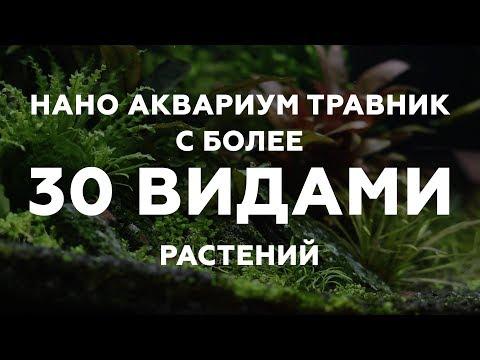 Нано аквариум креветочник - травник с более 30 видами растений.