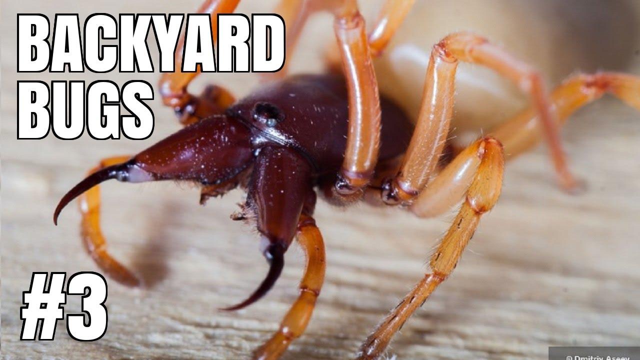 BACKYARD BUGS EPISODE #3   SOWBUG KILLER SPIDER   YouTube