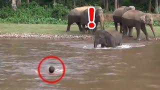 感動 ゾウの恩返し 溺れる男性の救助へ向かう赤ちゃんゾウ thumbnail