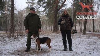 Охотничьи собаки. 29 серия. Финская гончая