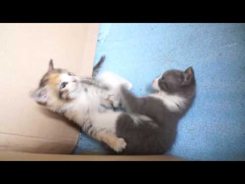 Смотреть онлайн Отдам котёнка Санкт Петербург