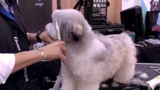 Judy Hudson: Teddy Bear Head