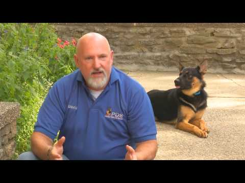 Video Brochure For the 'Build A Beast' Custom Trained Family Elite Personal Protection Dog For Sale