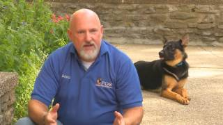 "Best Custom Trained Personal Protection Dogs ""build A Beast"" Program Explained"