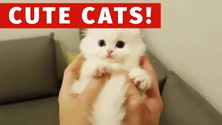 🤣 Best Funny Videos 😻 Cute Cat And Dogs 🐶 Awesome Funniest Animals Compilation #2 (2019)