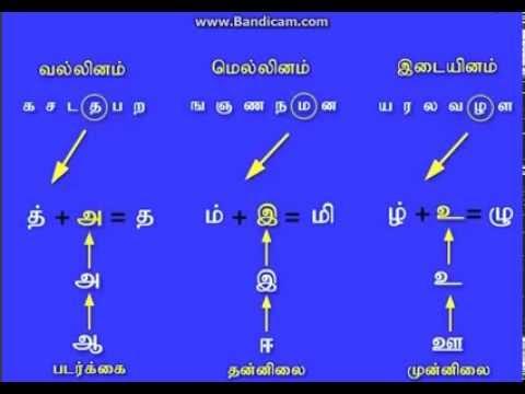 அழகிய தமிழ் உயிர் மெய் எழுத்துக்கள் (Tamil Fonts)