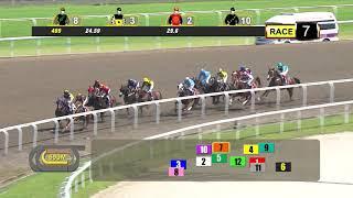Vidéo de la course PMU ROCKET MAN 2009-2012 STAKES