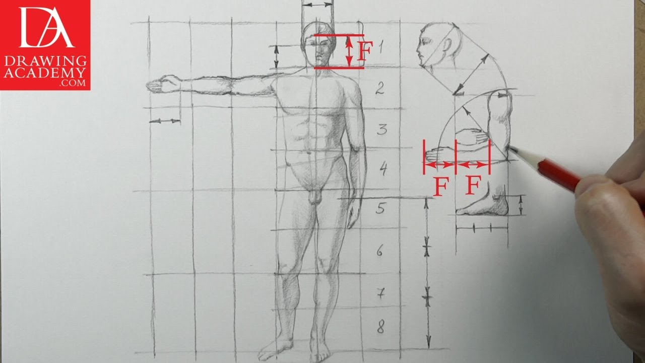 Proportion of the Human Body presented by Drawing Academy .com 33 ...