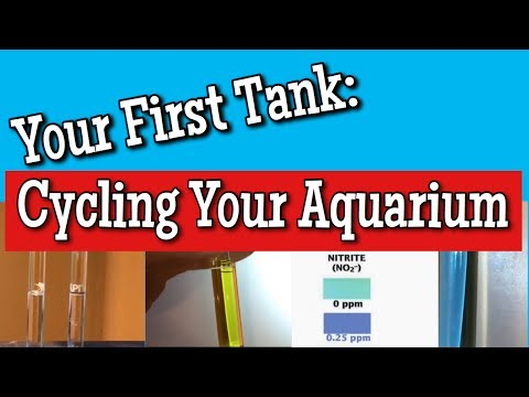 Your First Tank pt. 6: Cycling your Aquarium