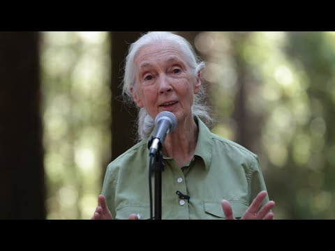 Jane Goodall speaks at Berkeley (full event)