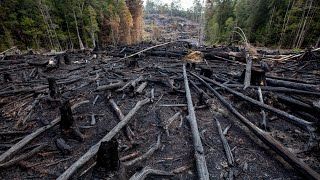 The new forest wars: 'This is something we didn't expect'