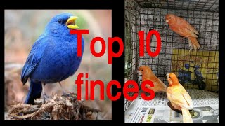Top ten finches and price