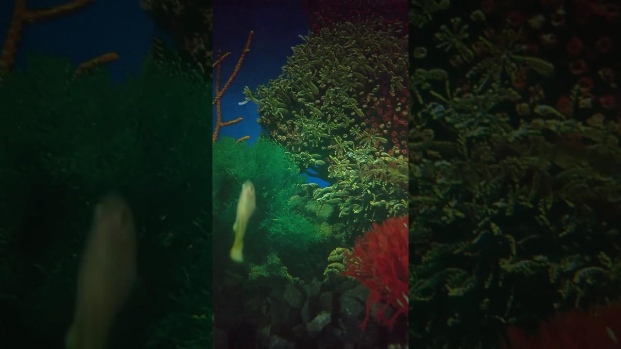 Aquarium Youtube