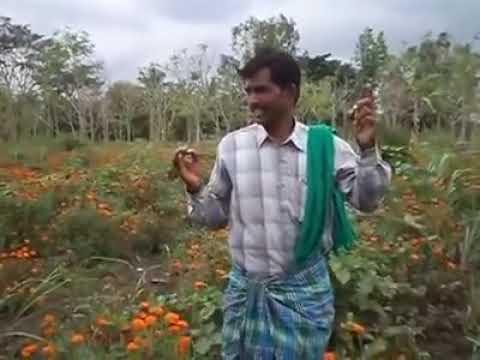 Good Agriculture Practices Zero Budget Natural Farming by Bannur Krishnappa, Mysore Dist, Karnataka