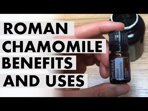 roman-chamomile-essential-oil:-benefits-and-uses-to-surrounding-plants-and-you