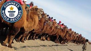 Largest Camel Race - Guinness World Records