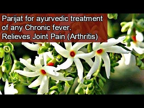 Medicinal Benefits of Parijat (हरसिंगार) | Miracle treatment for Arthritis /Chronic Fever (Eng Subs)