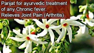 Medicinal Benefits Of Parijat (हरसिंगार) | Miracle Treatment For Arthritis /Chronic Fever (Eng Subs)