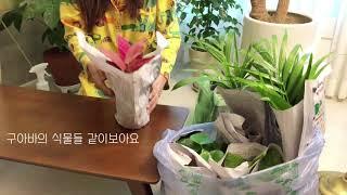 [안녕구아바] 구아바의 방구석 가드닝, 양재꽃시장에서 …