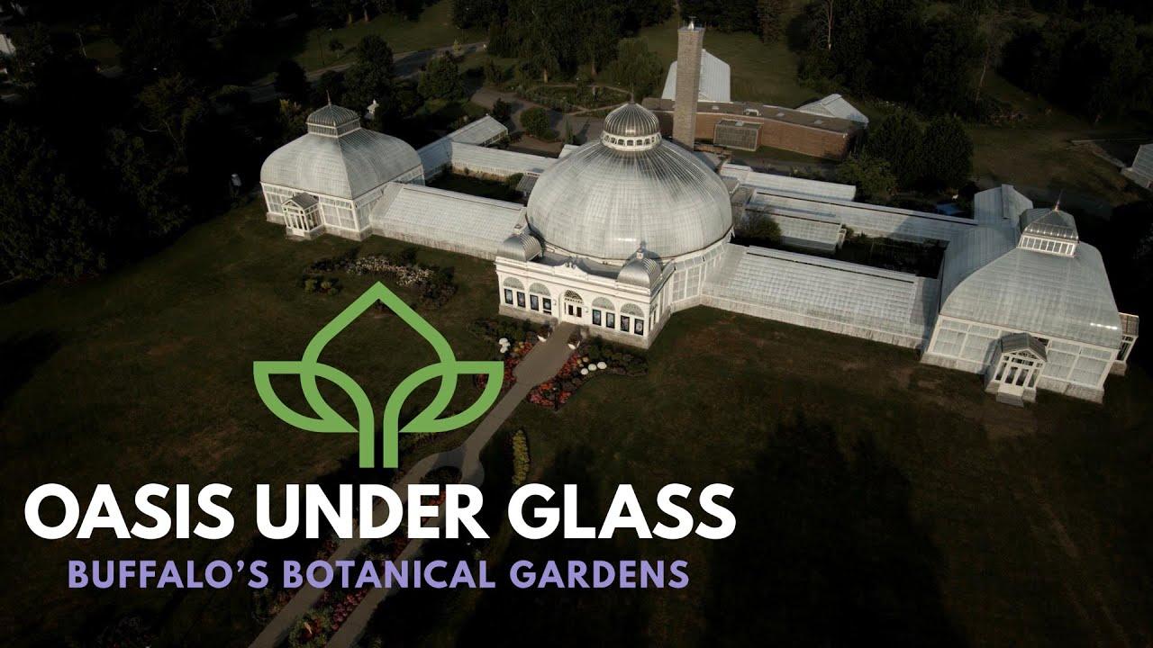 Oasis Under Glass | Tease