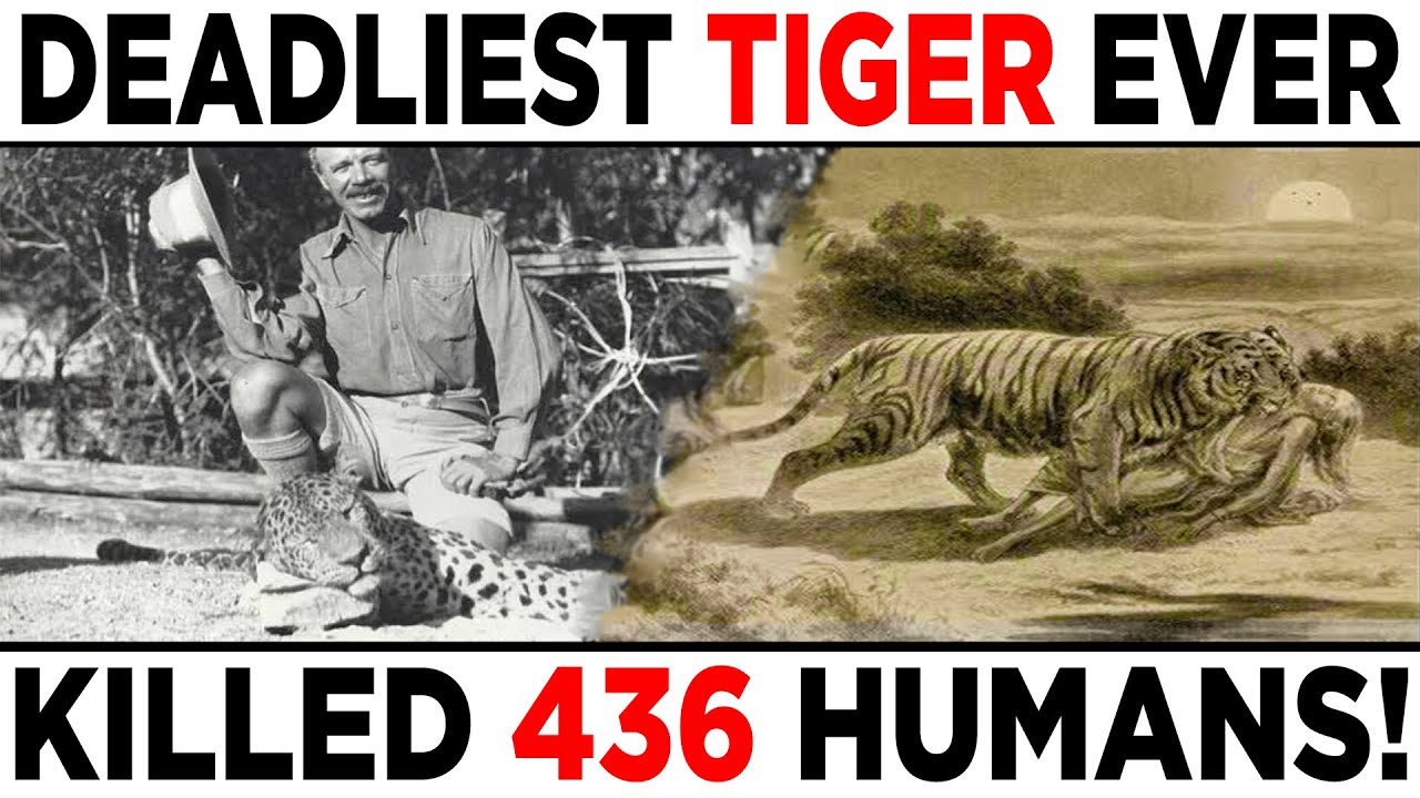 The Champawat Tiger - One of the deadliest man eaters in history!   Jim Corbett Story - YouTube