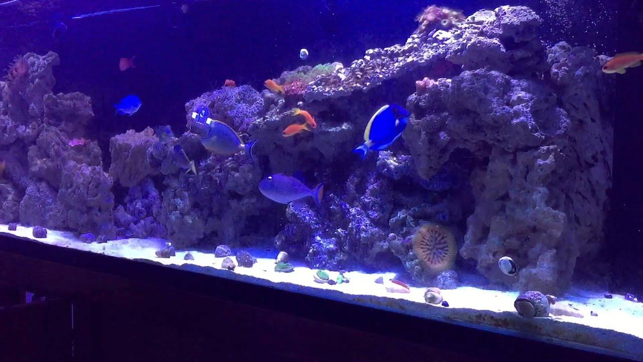 Saltwater aquarium 200 gallon for sale 2017 fish tank for Saltwater aquarium fish for sale