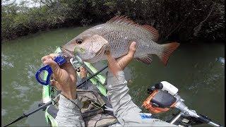 BIG Mangrove Jack Snaps My Rod Fishing on Dragon Kayak