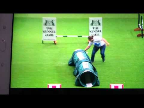 Thumbnail: Quickest Jack Russell Olly at Crufts Blue Cross Rescue Team 2016